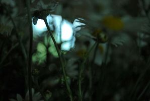 if the flowers... by lauraverde
