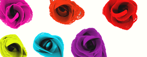 Roses in many Colors by prisc8328