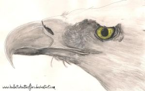 Painting: Bald Eagle by BulletsxButterflies