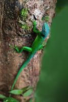 Lizard by JPGphotos