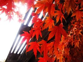 .:The Color of Autumn:. by kath660