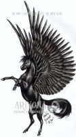 Black pegasus by Arixona