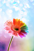 Rainbow Flower by gracie-is-a-pie