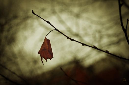 Last breath of autumn 6 by Jimmy-webs