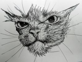 Wet angry kitty by Abuttonpress2Nothing