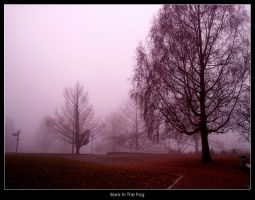 Bare In The Fog by chakram