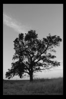 The Tree Of... by Zwillingsflamme