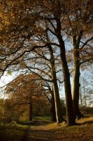 Caressing Autumn Trees by steppeland