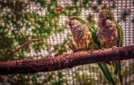Birds of a feather by TylerLewis