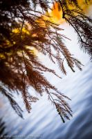 Pine Needles Die Too by DrAndrei