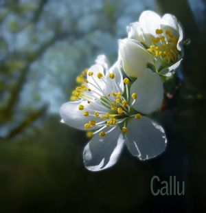 Spring Reshaded by Callu