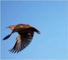 Motion of a Meadowlark 2 by SuicideBySafetyPin