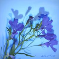 July is blue 13 by martaraff