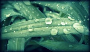 Early Morning Water Drops by electric-lime