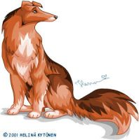 a flash collie by henu