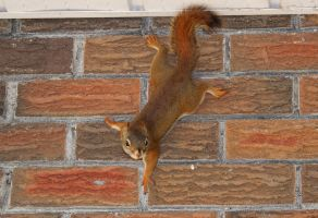 Spidey Squirrel by boogster11
