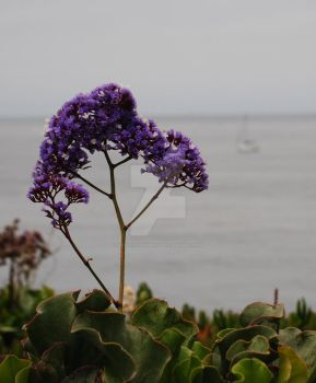 Flowers By the Sea by musiclover25162