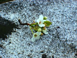 Flowers on a grave by Kinipella