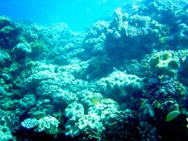 reef IV by bootstrap-beth