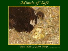 MIracle of Life 8 by dragonpyper