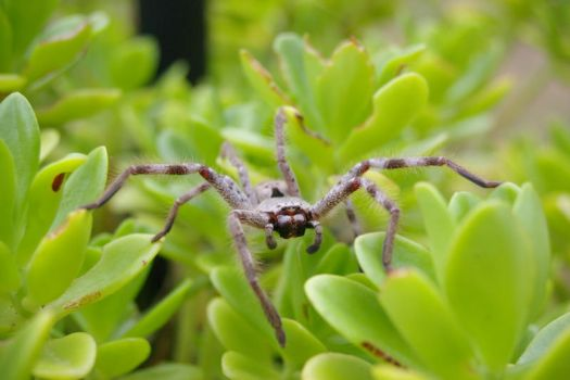spider that sat on a plant8 by vjs