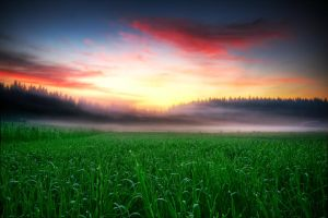 Morning dew by Timosetae