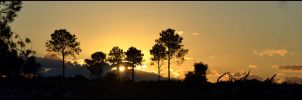 Wangara Plantation Sunset by MayEbony