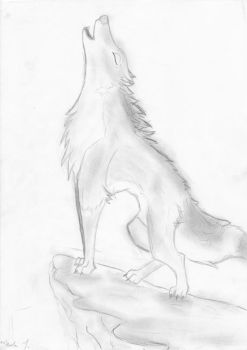 Wolf. by Windchill16