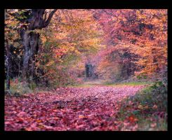 Le Chemin Rouge by Anrold