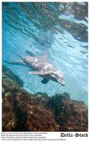 Underwater Dolphin and Rocks by Della-Stock
