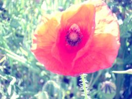 More than a flower. by XxFreakOfNaturexX