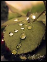 Water Drops on Rose Leaf v2 by Frozz