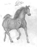 Arabian Horse Drawing by CuteUnicorn