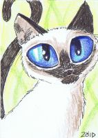 ACEO Funny cat Kitten Breeds Siamese by KingZoidLord