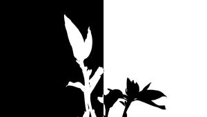 Flower Black and White. by agreenbattery