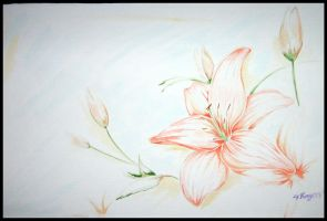 Lily-flower 08 by Jag-san