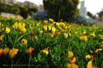 Flower Garden by muslim2proud