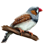 Zebra Finch - Commission by s1088