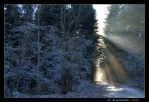 Sunbeams in icy forest by brueni