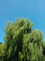 The Mighty Willow by sameera95