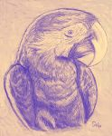 Macaw Parrot by Art-Diversity