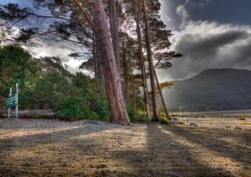 Lonesome Pines by cprmay
