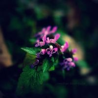.:my name is purple:. by neslihans
