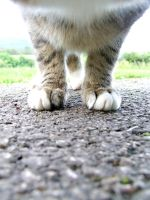 Kittens Paws. by ElectedTheRejected