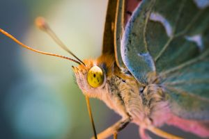 butterfly 2 by damirarapovic
