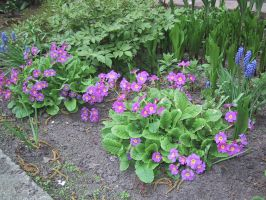 The purple part of the flowerbed by Nemiflora