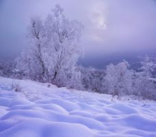 Whiteworld by borda