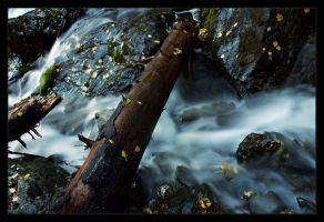 Fallen Log Over Pioneer Falls by anonymous66