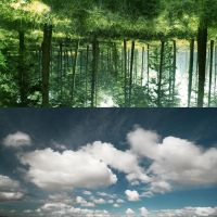 Sky Forest_Forest Sky by P0RG