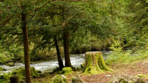 Forest and river Orbe 5 by ALP-Stock